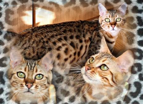 Douilledouille8295753-bw-leopard-peau-arriere-plan-ou-la-texture-grande-resolution