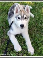 Lennox (3,5 mois)