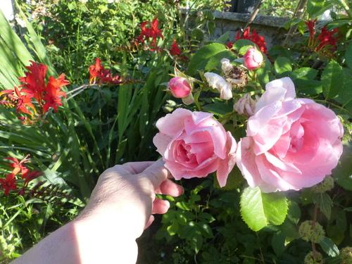 l'été 2017 au jardin de l'abbaye 2