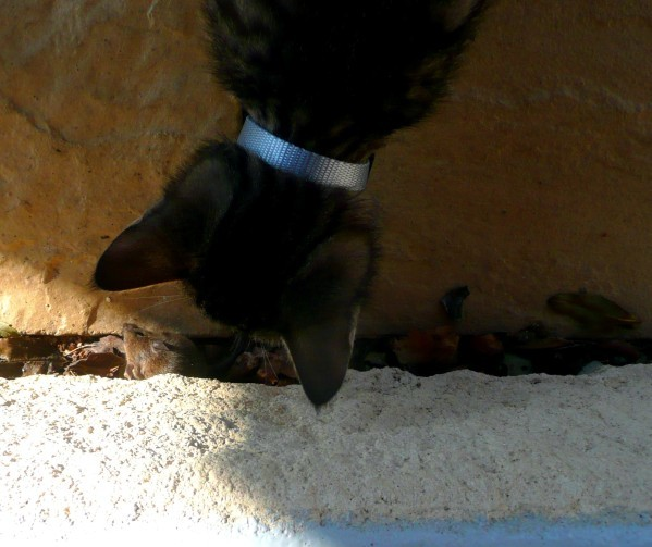Titi-vs-souris-1-copie-1.jpg