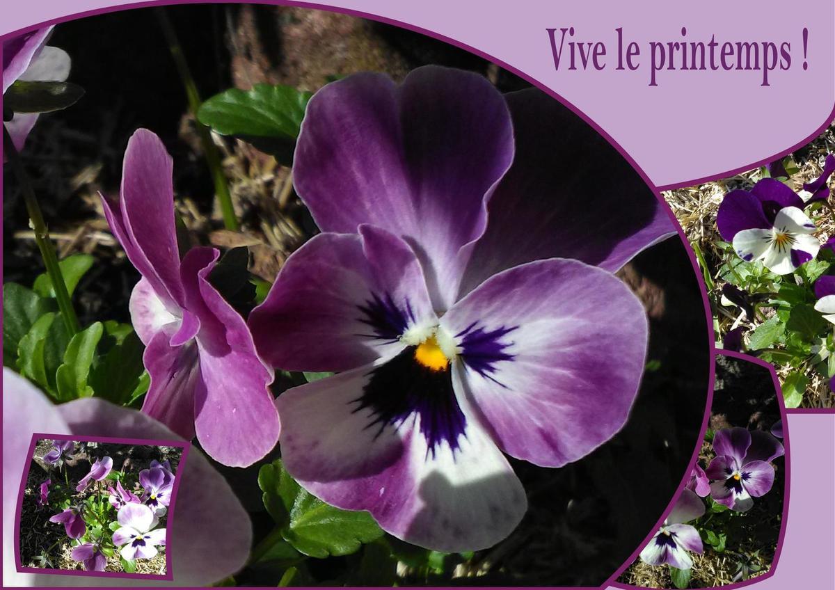 Les participations au Café Thé n° 119 - Les signes annonciateurs du printemps...