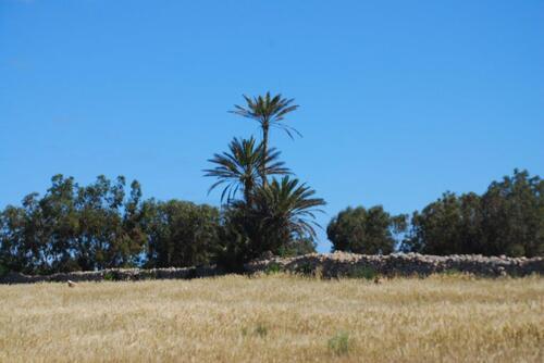 petit champs et rare palmiers...