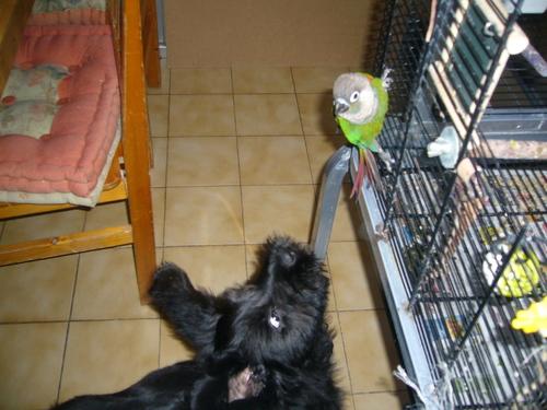 Cyssie et sa conure qui est au paradis (Octobre2007)