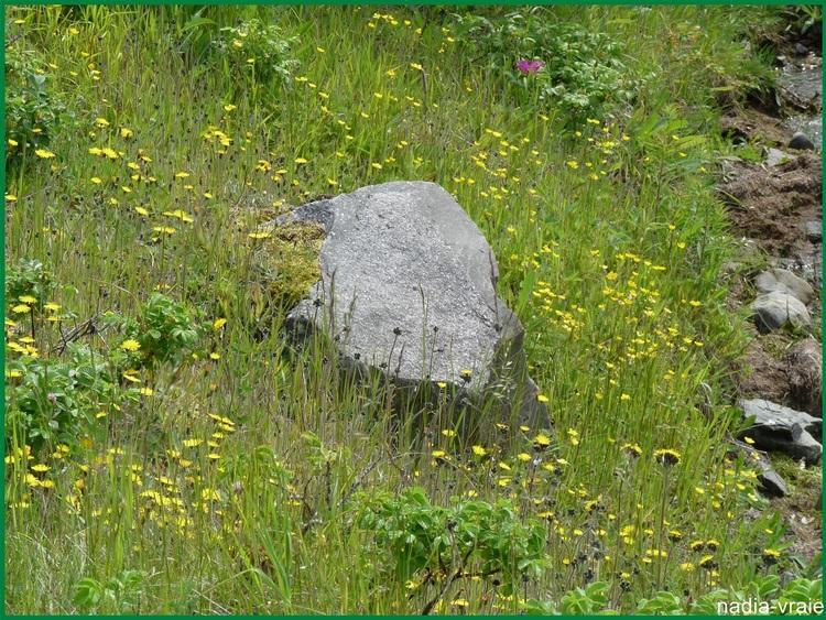 Une roche. (Défi de khanel pour février 2016)