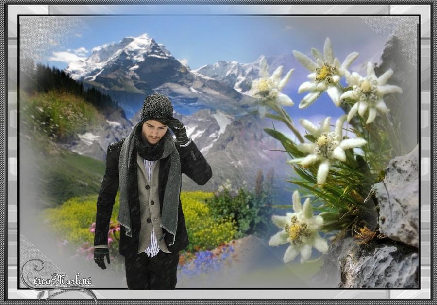 Ledelweiss des glaciers