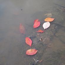 photos de jour en jour : du 1er au 15 novembre
