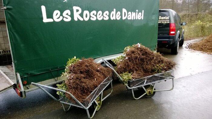 Les Roses de Warren : En route vers Malmédy