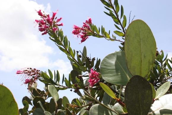 de belles fleurs de la campagne amazonienne