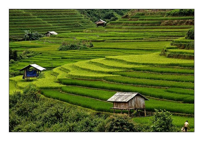 Une rizière par jour 20