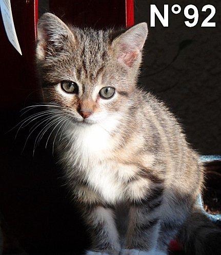 Gnocchi-de-fils-cadet-Brigitte-n-92.jpg