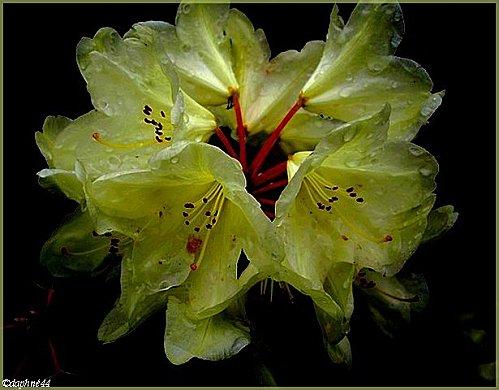 fleurs-jaune--cadre.jpg