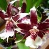 Orchidées 3.jpg
