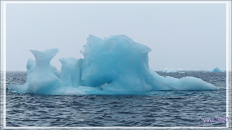 Encore quelques spécimens admirés dans le cimetière d'icebergs de Savissivik - Qaasuitsup - Baie de Melville - Groenland