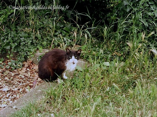 Poitiers : abris pour chats - Poitiers : shelters for cats