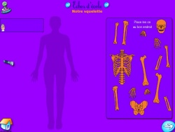 Les parties du corps, les articulations
