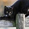 Chat sur barrière