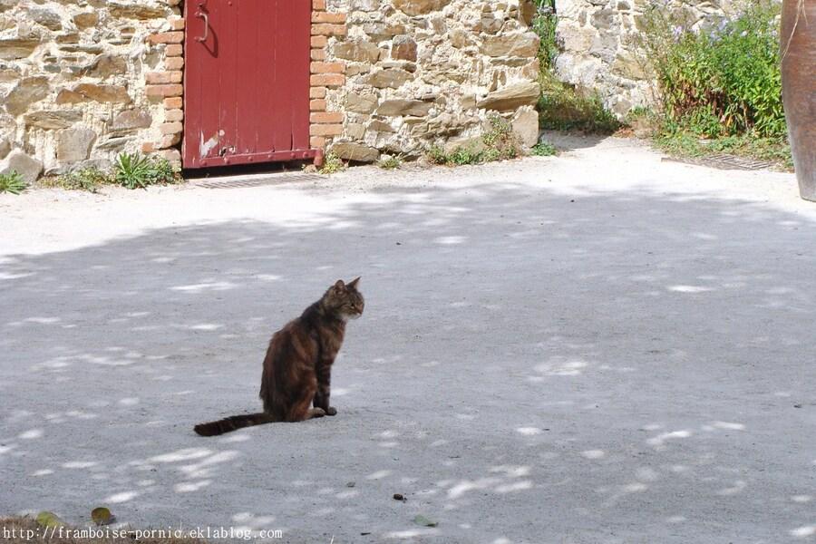 Les Chats ....