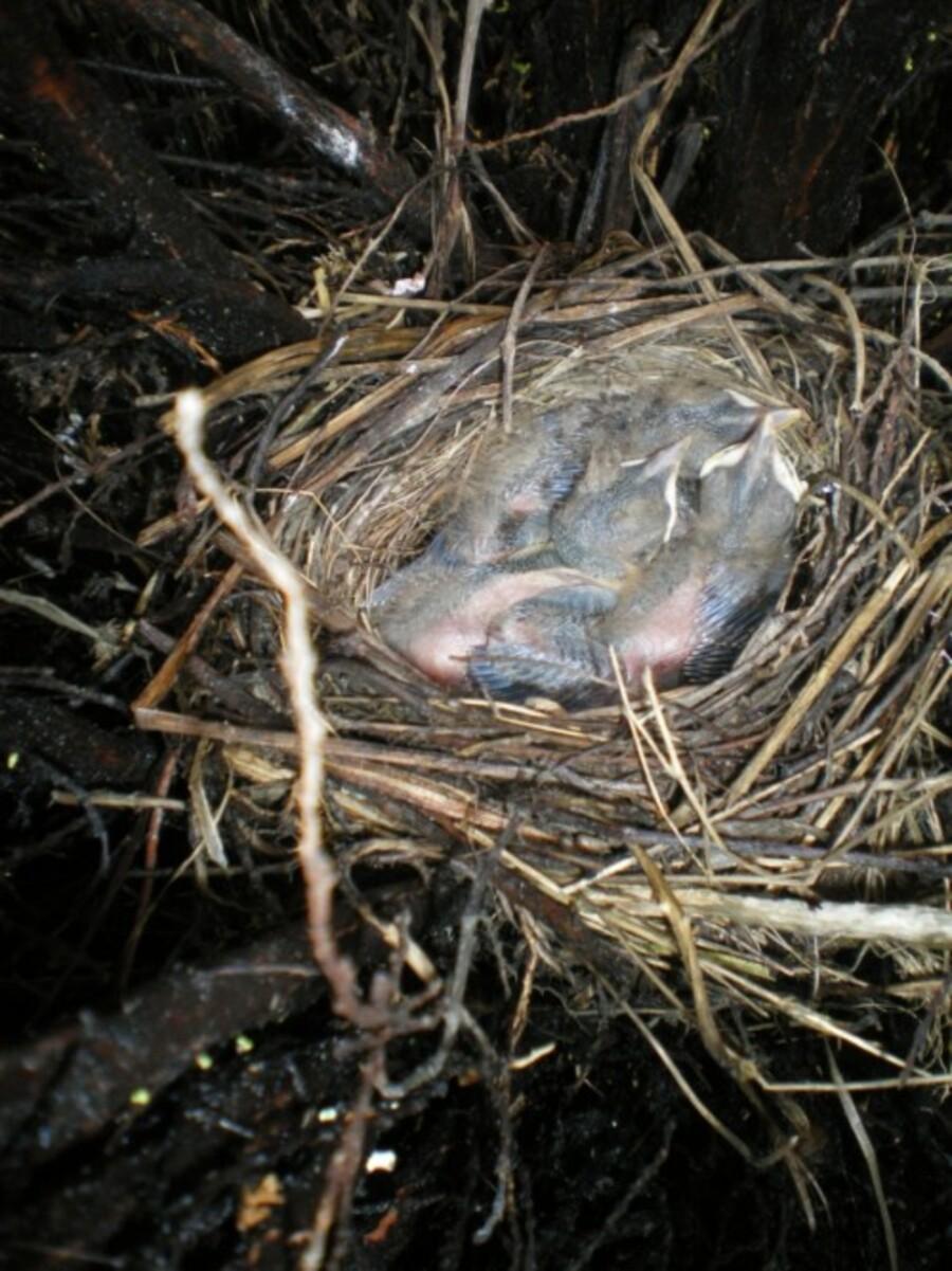 Défi de Khanel ce mois : oiseau