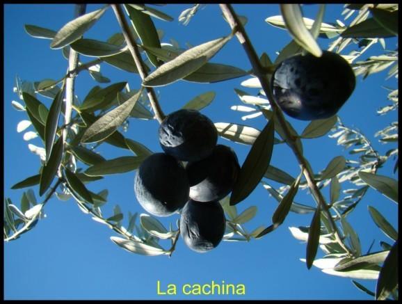 olives-noires--24-.JPG
