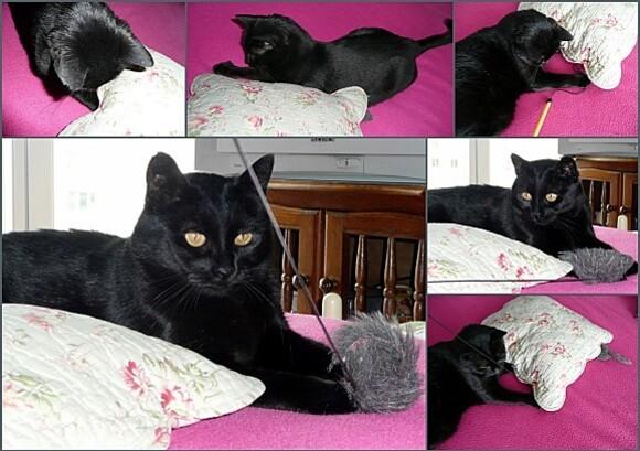2011-05-31-pepita31.jpg