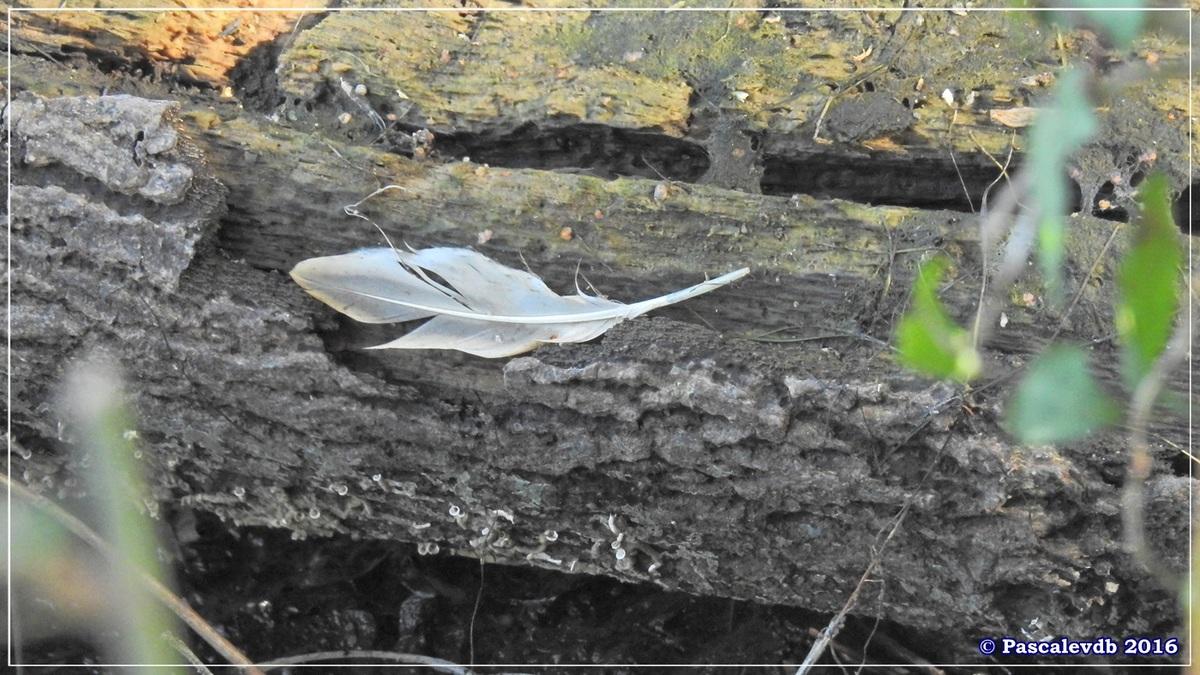 Réserve ornitho du Teich - Septembre 2016 - 7/11