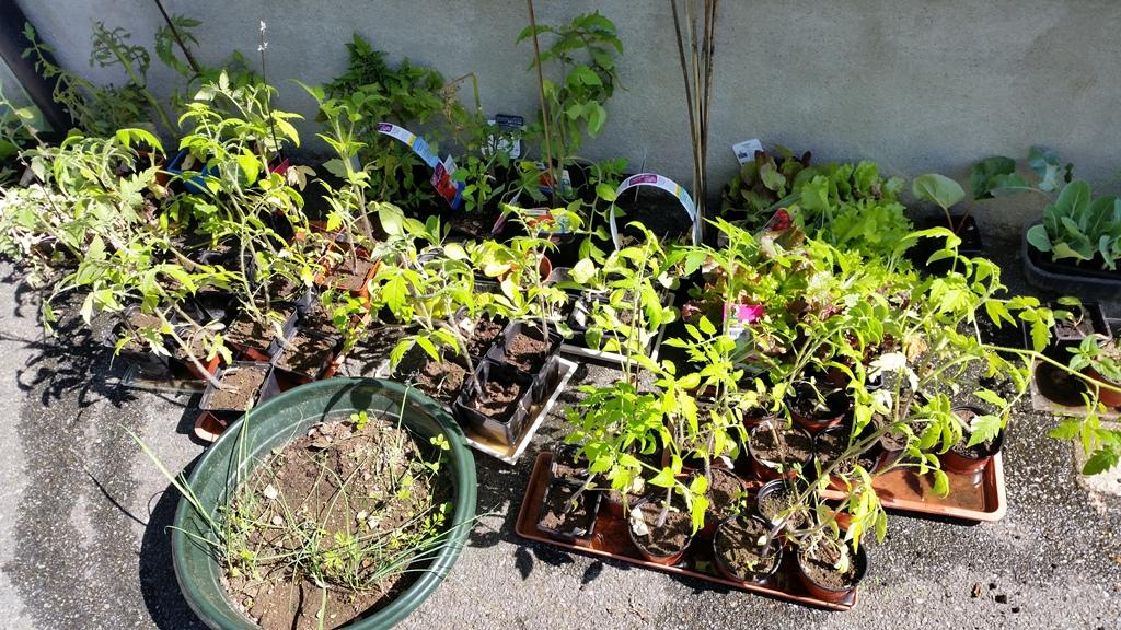 Les jardineries et les familles nous aident dans notre projet