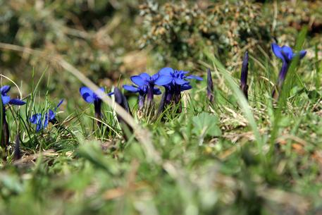 Fleurs de montagne : liste - Ooreka