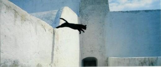 13 - Le chat vole
