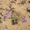 058 Désert fleuri