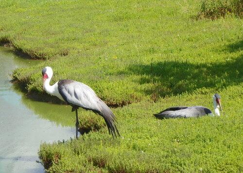 Le Parc des Oiseaux à Villars-les-Dombes ( 9 et fin )