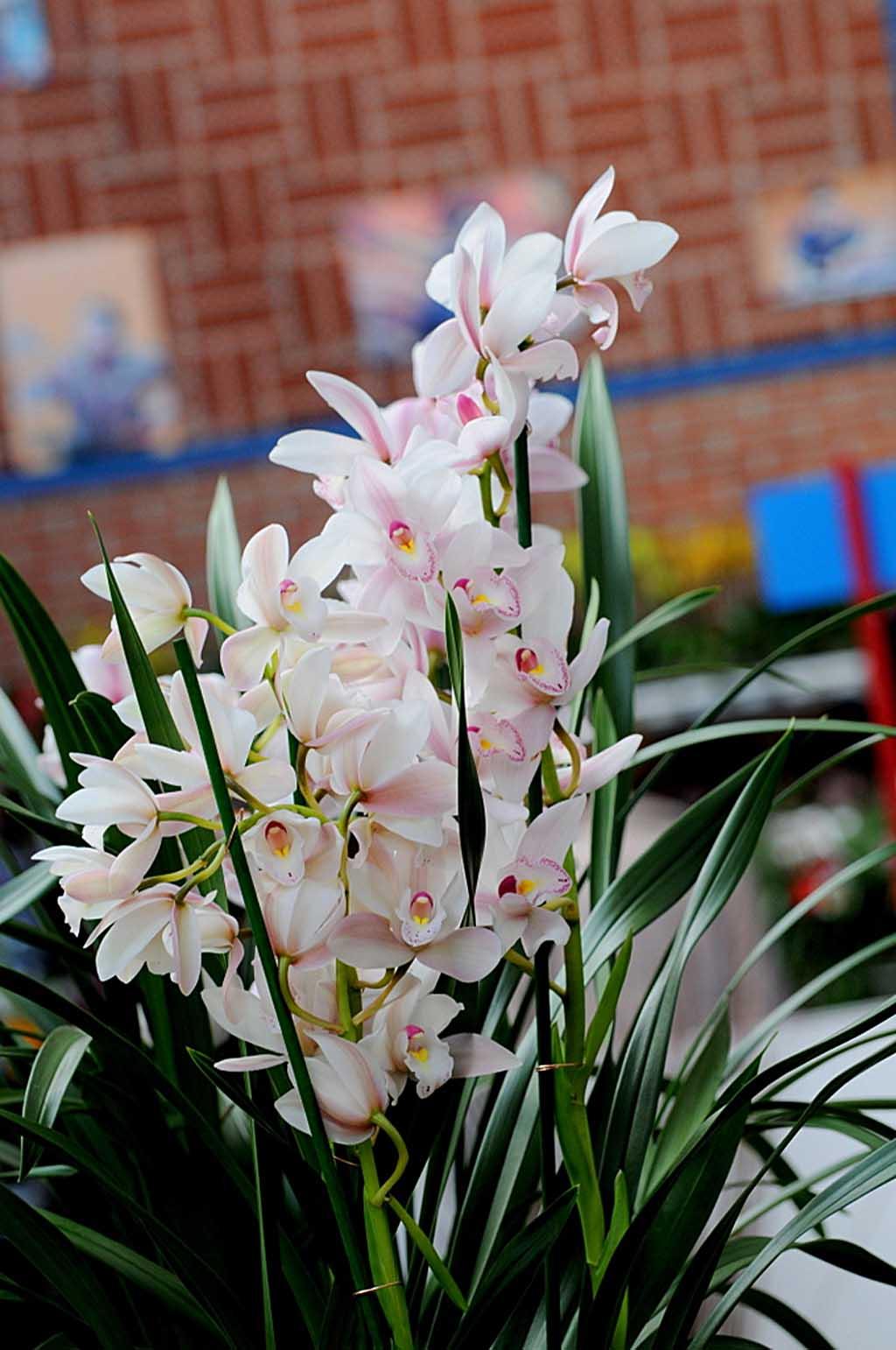 Exposition d'orchidées à Annequin (10)