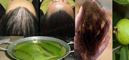 goyave-cheveux