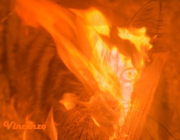 flamme et chat