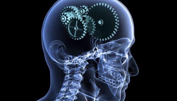 La fabrique du cerveau |