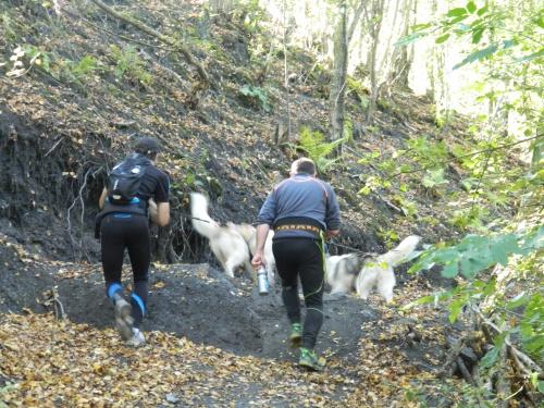 Cani rando à Rieulay