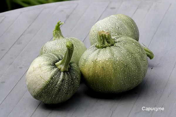 Récolte gourmande : tomates et courgettes