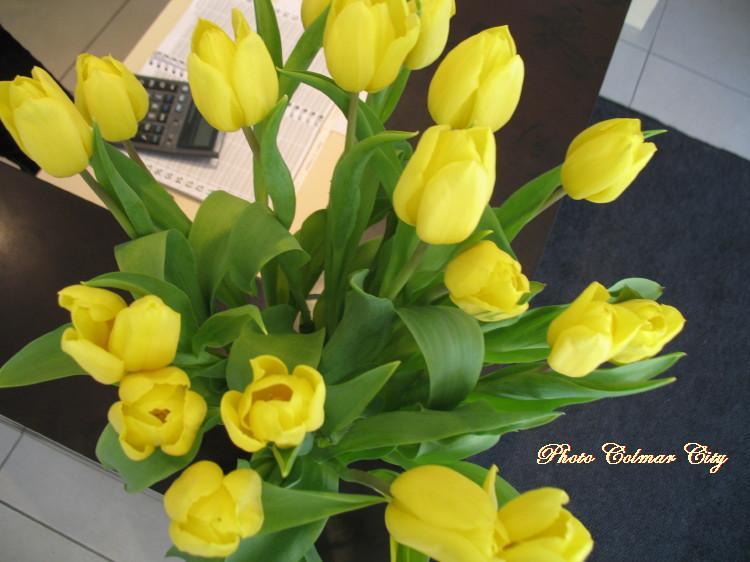 Des fleurs chez le coiffeur 27