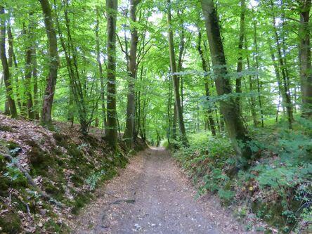 Randonnée forestière en Pays du Neubourg