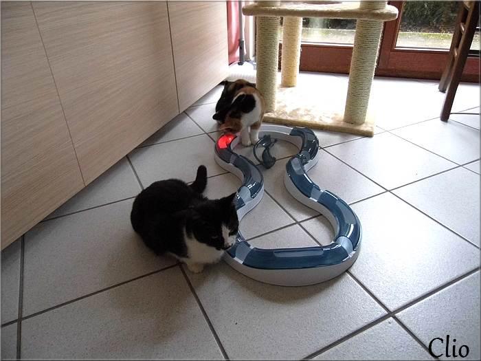 """La  """"famille chats"""" s'agrandit. 1er décembre 2014"""