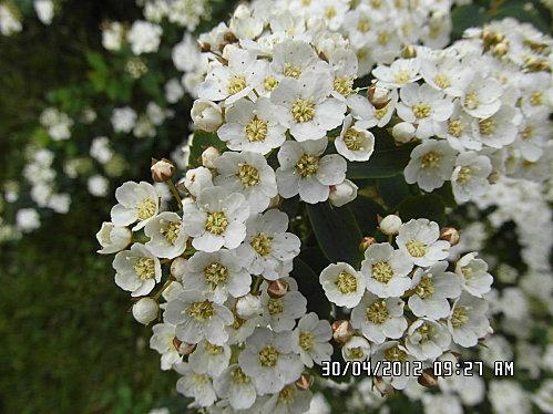 fleurs-007.JPG