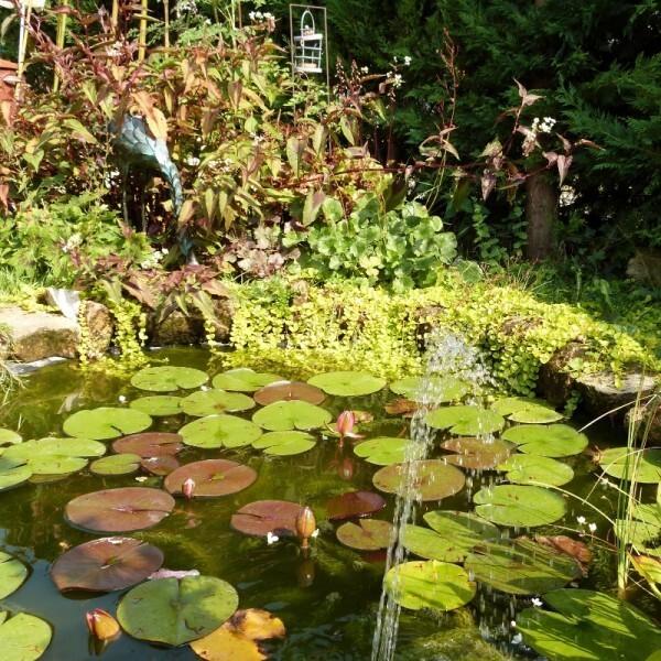 cagouille-s-garden---le-bassin--800x800-.jpg