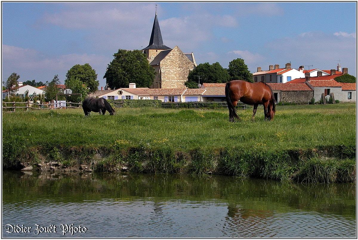 (85) Vendée - Sallertaine (2)