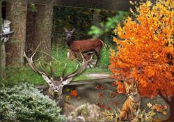 Défi la forêt en automne