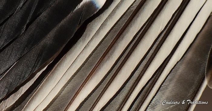 la magie des plumes