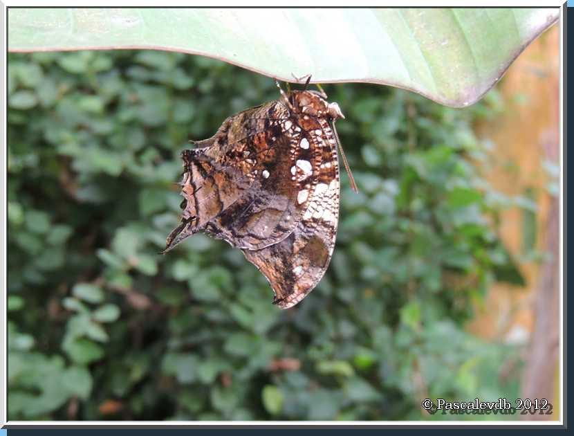 Le Paradis des Papillons à Sanguinet - 6/9