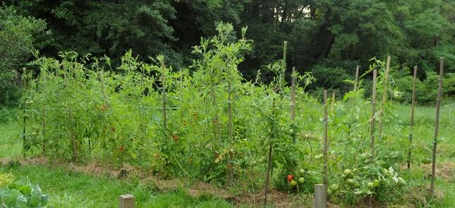 - Très bref clin d'oeil sur la permaculture -