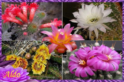 PPS Fleurs de cactus