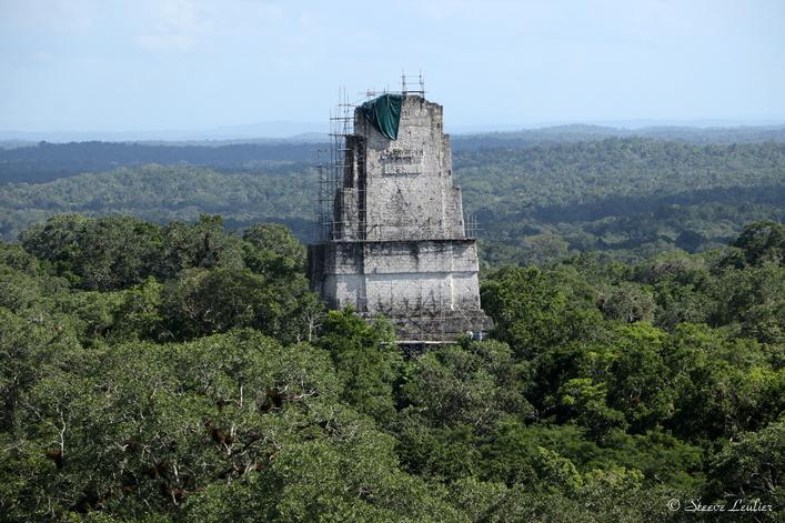 Premier pas sur le site de Tikal