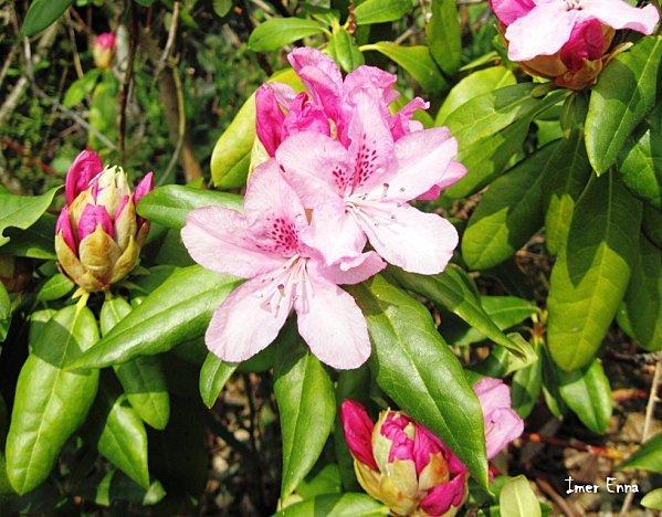 Fleurs-3140.JPG