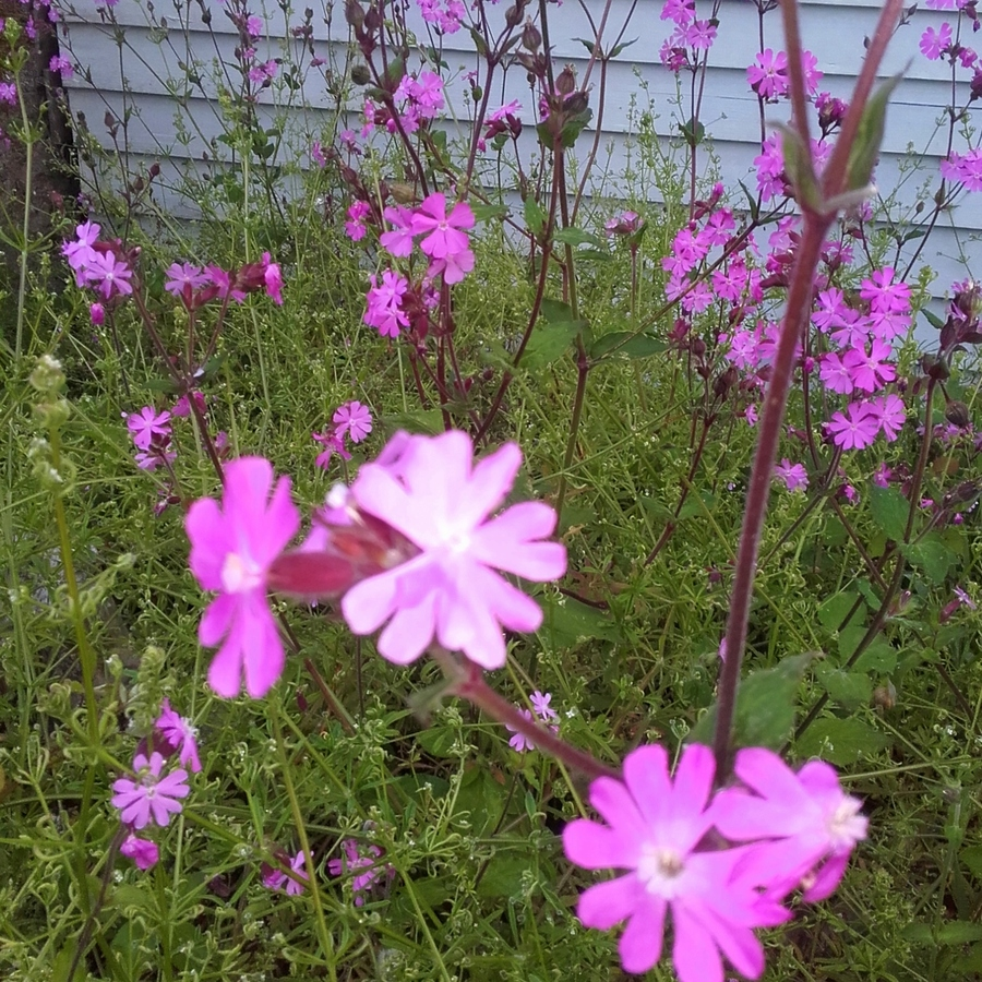 Fleurs  dans tous leurs états